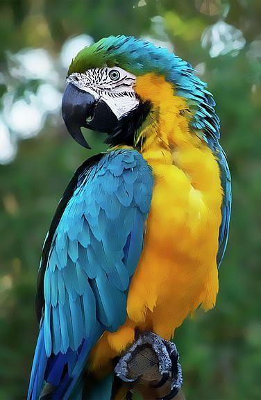 Какая птица вам покровительствует по месяцу 5a8c11e632083