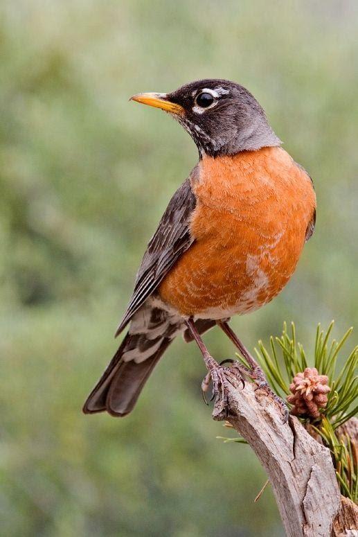 Какая птица вам покровительствует по месяцу 5a8c120e99470