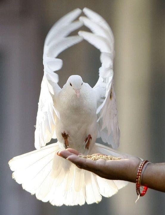 Какая птица вам покровительствует по месяцу 5a8c12b914649