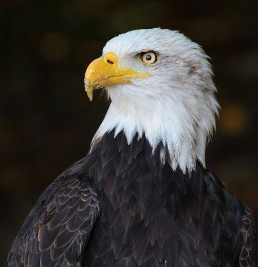 Какая птица вам покровительствует по месяцу 5a8c12e260e4d
