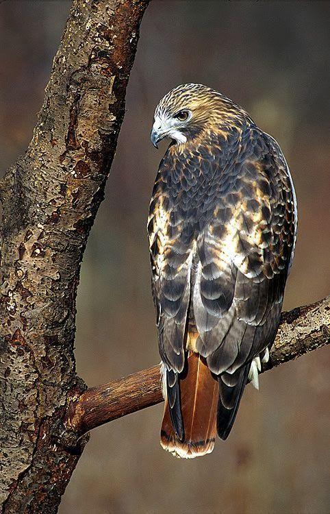 Какая птица вам покровительствует по месяцу 5a8c1307cb435