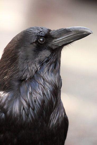 Какая птица вам покровительствует по месяцу 5a8c136977afc